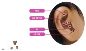 耳つぼの仕組み